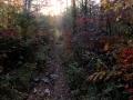 秋色の初冬の森