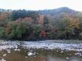 北斜面の樅林と紅葉