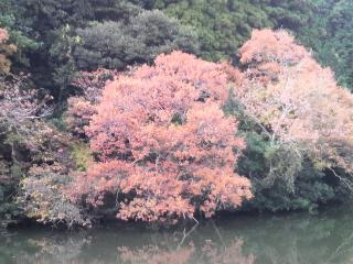 kinjo112701.jpg