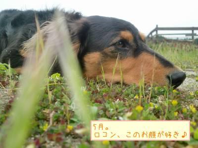 CIMG1273_20091229235606.jpg