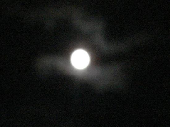 tuki2011819.jpg