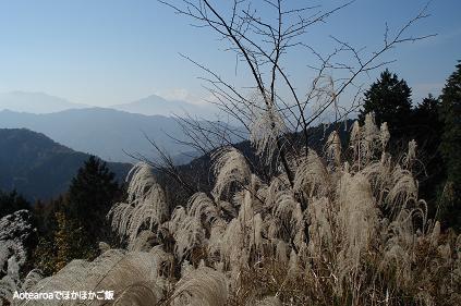 ichodaira2.jpg