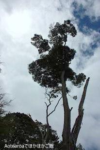 tree100124.jpg