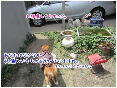 2011-05-14-03.jpg