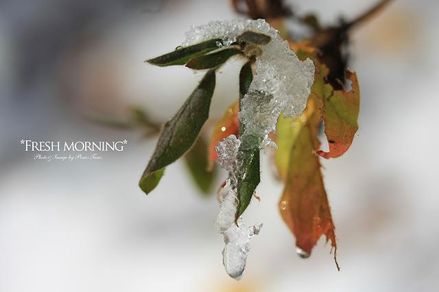 fresh morning 03