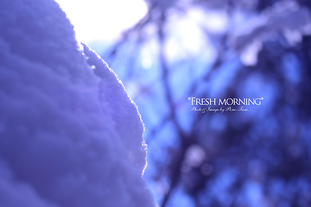 fresh morning 01