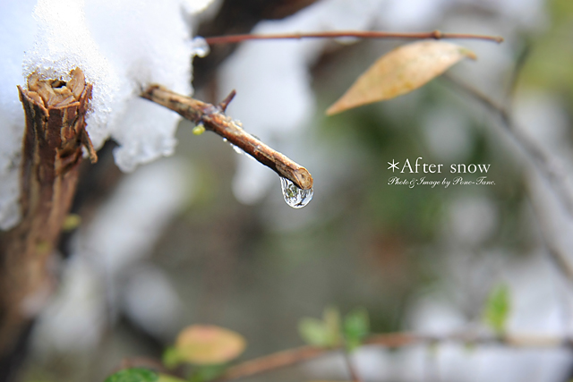 after snow 02