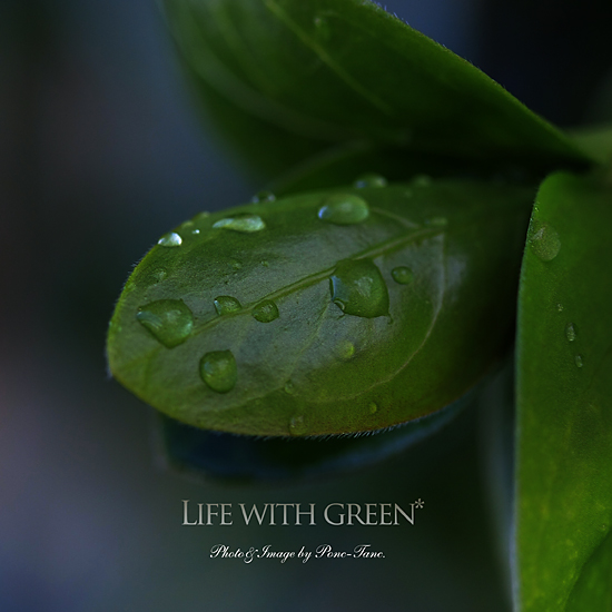 LIFE WITH GREEN
