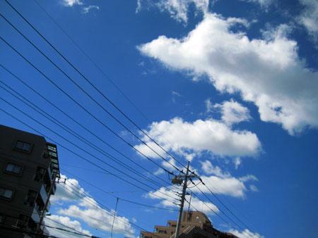 画像は昨日の空だけど 今日も同じくらいの雲具合 綺麗な空