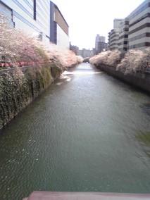 megurokawa2.jpg