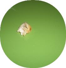 02164.jpg