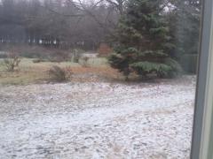 snow_1128.jpg