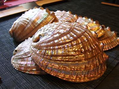 あわびの殻