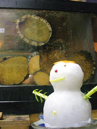 雪だるま・あわび紹介♪