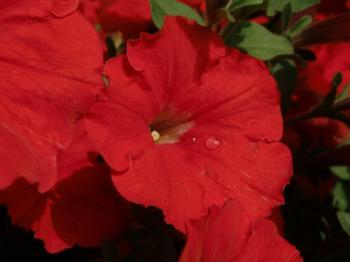 赤い花(10-04-07)