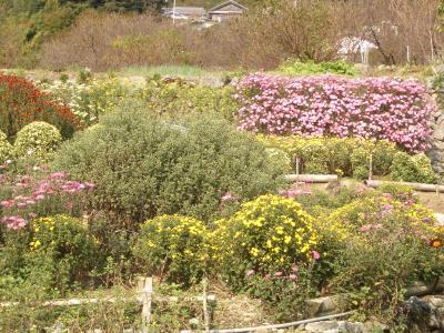 1102菊花園