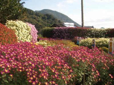 1106菊花園1