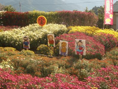 1106菊花園4