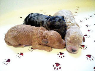 chacha-puppy2.jpg