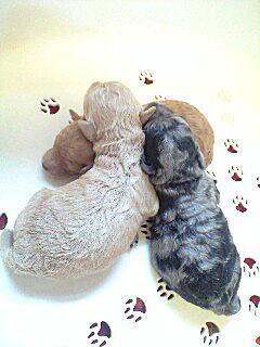 chacha-puppy3.jpg