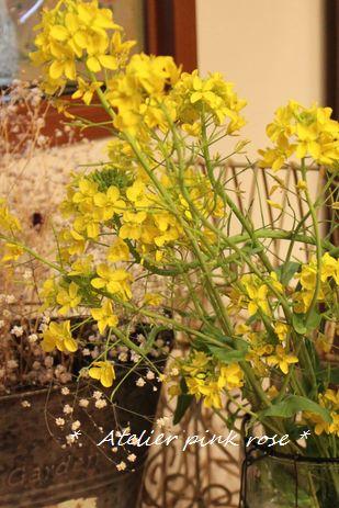3.18菜の花