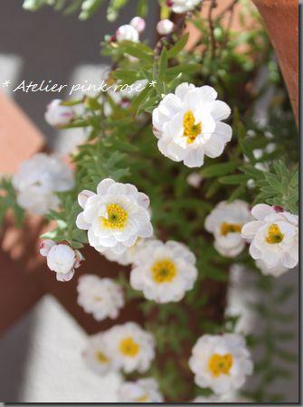 3.21花かんざし