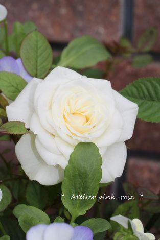 6.19ミニ薔薇