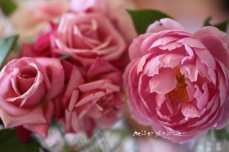 9.4薔薇