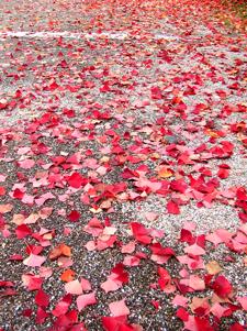落ち葉のアート
