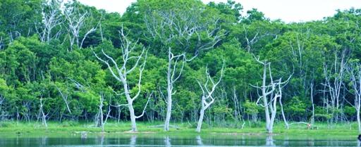 水に浮く森