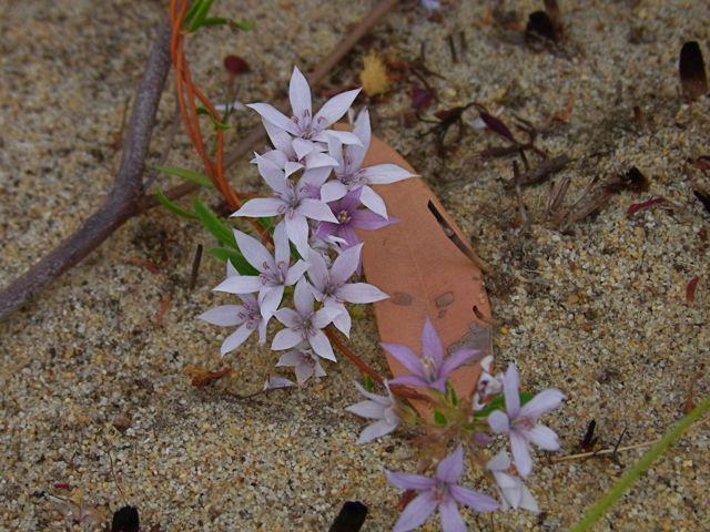 2:6紫白花