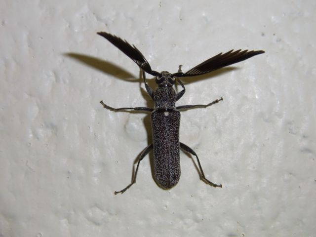 4:26触覚立派甲虫