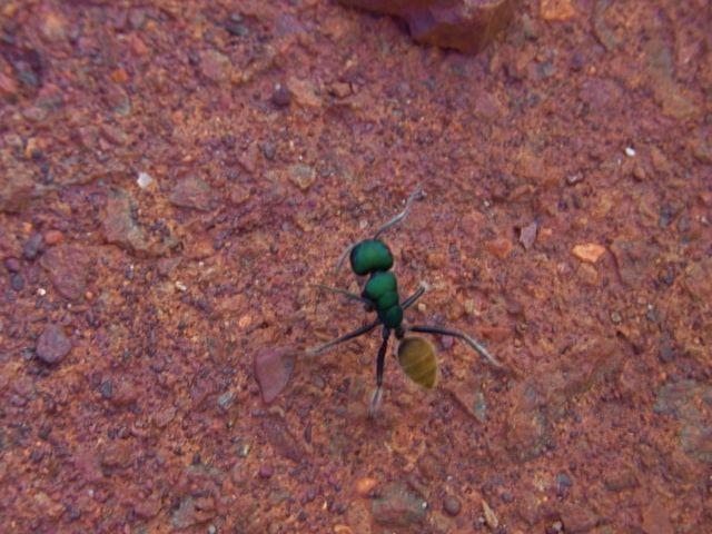 4:29緑蟻