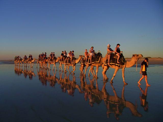 5:3ブルーム駱駝反射