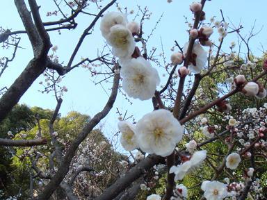 画像2010228.okamotobairinn 018a