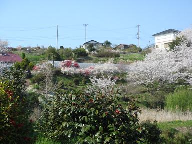 sakura.nakada 002a