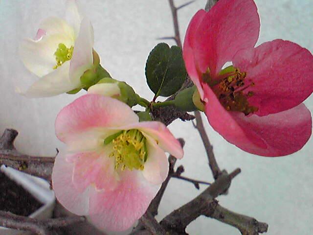 校庭の花。