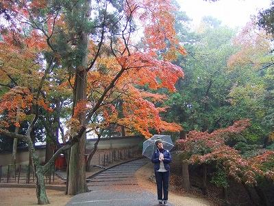 奈良公園④