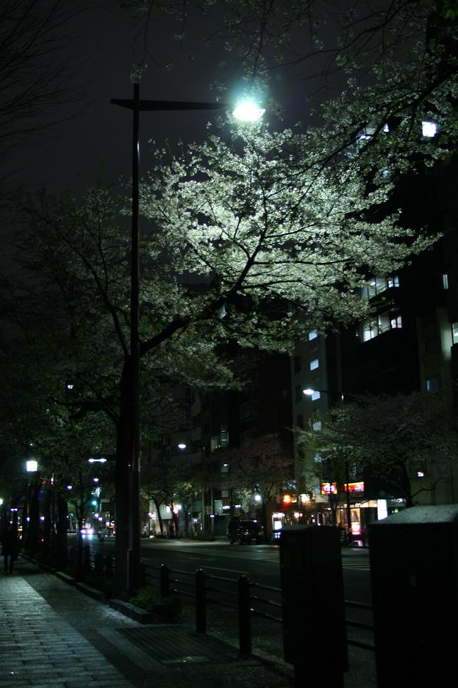 IMG_0884-sakura.jpg