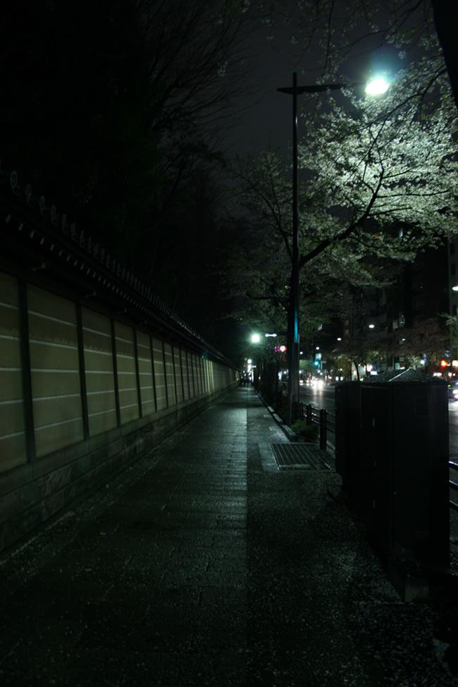 IMG_0885-sakura.jpg