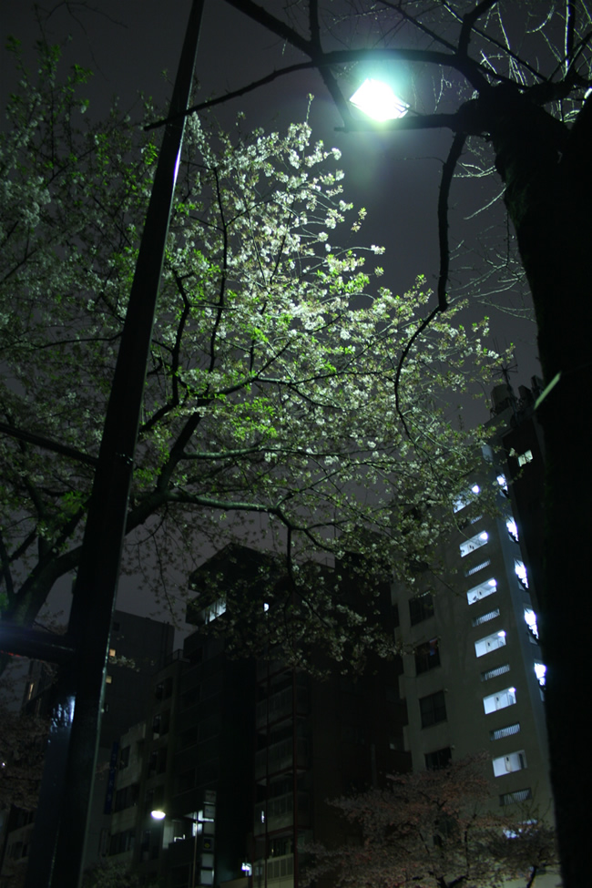 IMG_0891-sakura.jpg