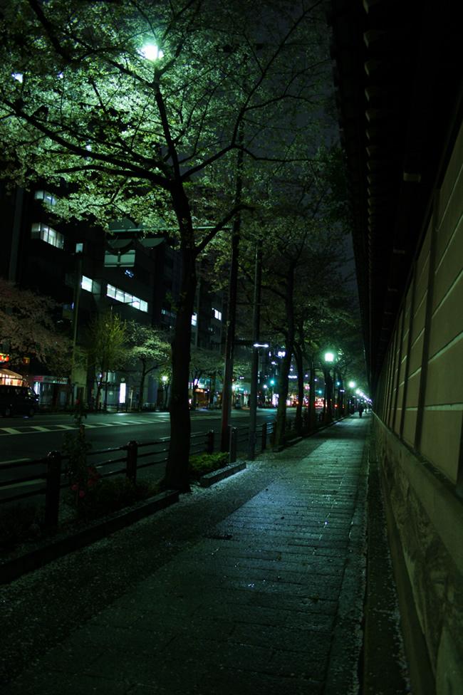 IMG_0893-sakura.jpg