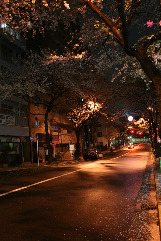 IMG_0919-sakura.jpg