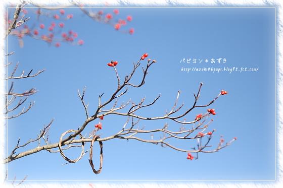 20121125_IMG_4613.jpg