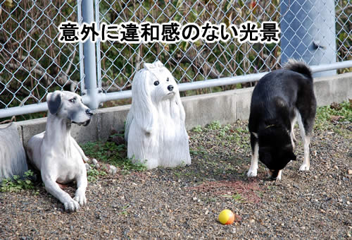 犬は何匹だ
