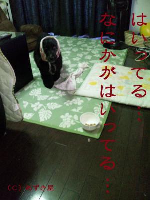 azuki118.jpg