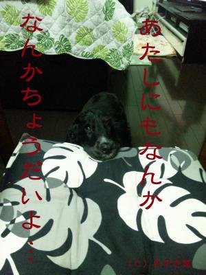 azuki212.jpg