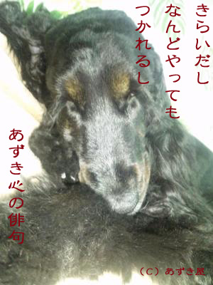 azuki214.jpg