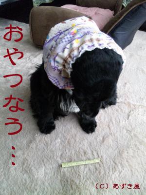 azuki228.jpg