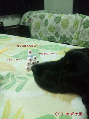 azuki249.jpg